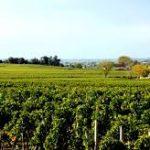 viticultoresródano